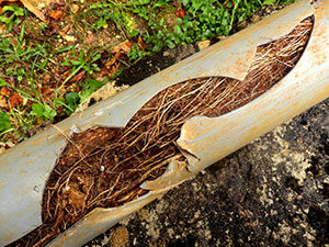 Drain water jetting can remove Root clogs causing Pipe damage.